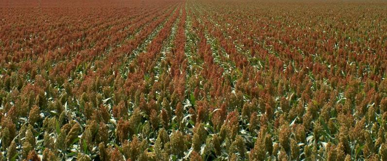 KANSAS GRAIN SORGHUM hires staff and elects new board members