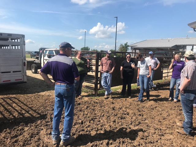 Dr. Bob Weaber, professor and extension specialist with the Department of Animal Sciences and Industry, demonstrates effective cattle-handling procedures.