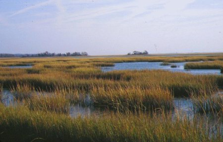 Image result for salt marsh