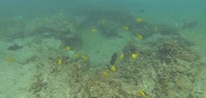 De svømmer uden pulbouy