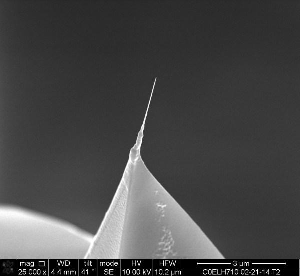 FN-3 - Carbon Nanotube AFM Probe