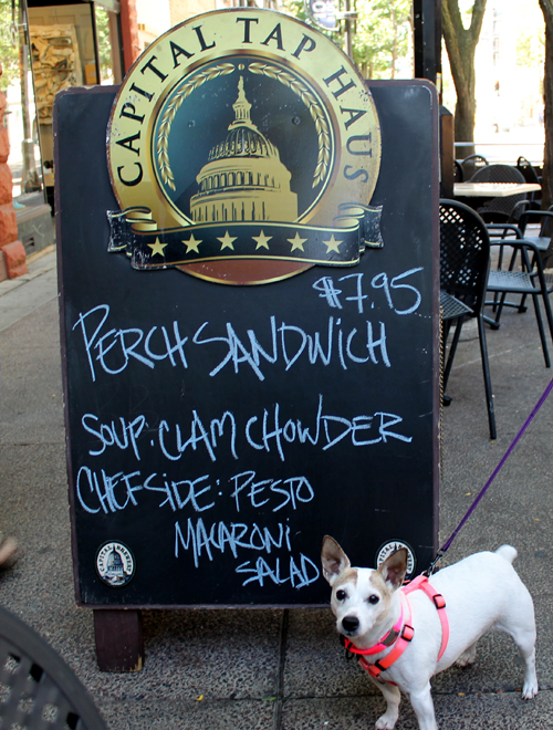 Travel Dog Blog, Madison, Wisconsin