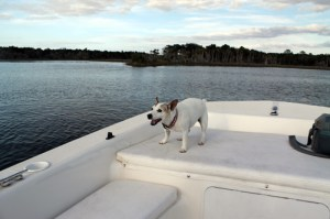 Travel Dog Blog, Maggie on the Water