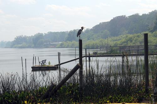 Lake Panasoffkee