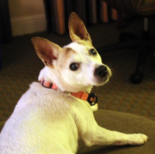 Travel Dog Blog, St Louis