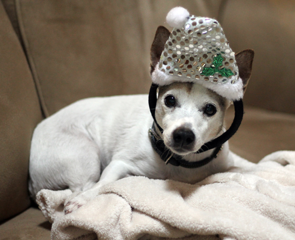 Maggie in her New Year Garb