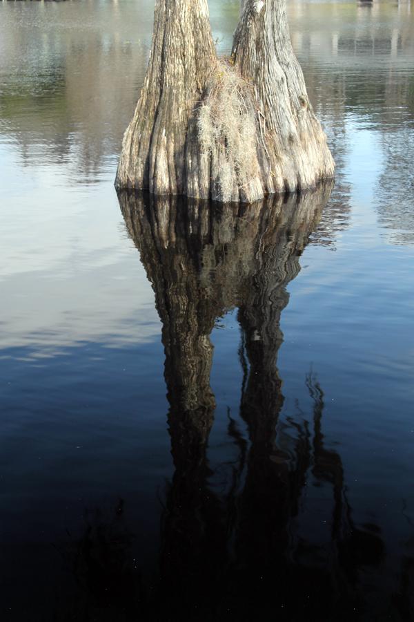 Tsala Apopka Chain of Lakes