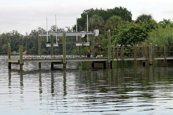Gulls on a Dock