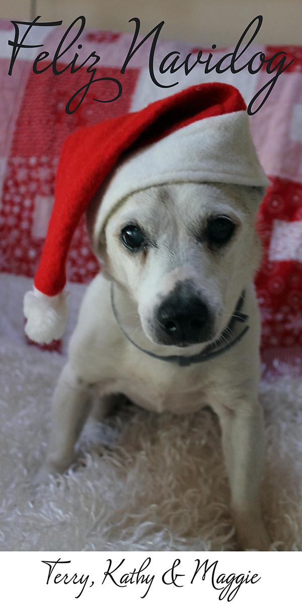 Maggie's Christmas Greetings