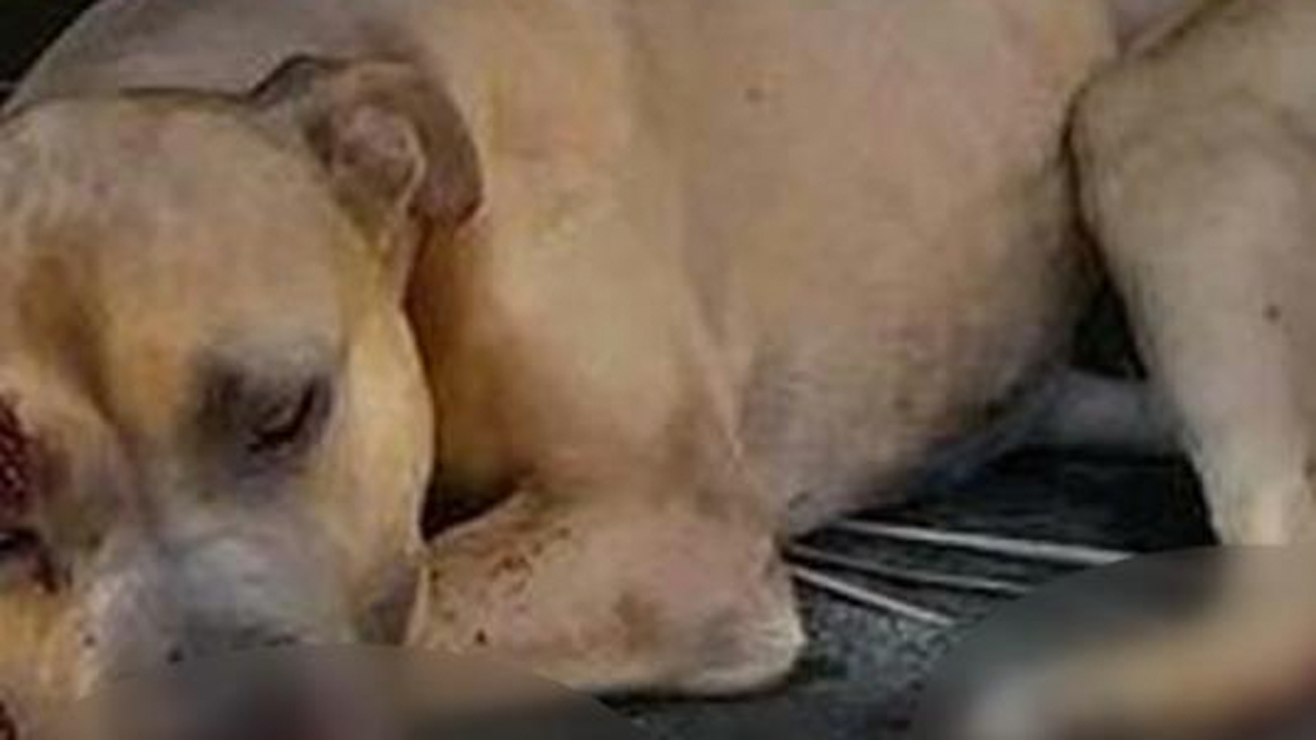 """A photo of """"Justice"""" was posted by the Animal Legal Defense Fund."""