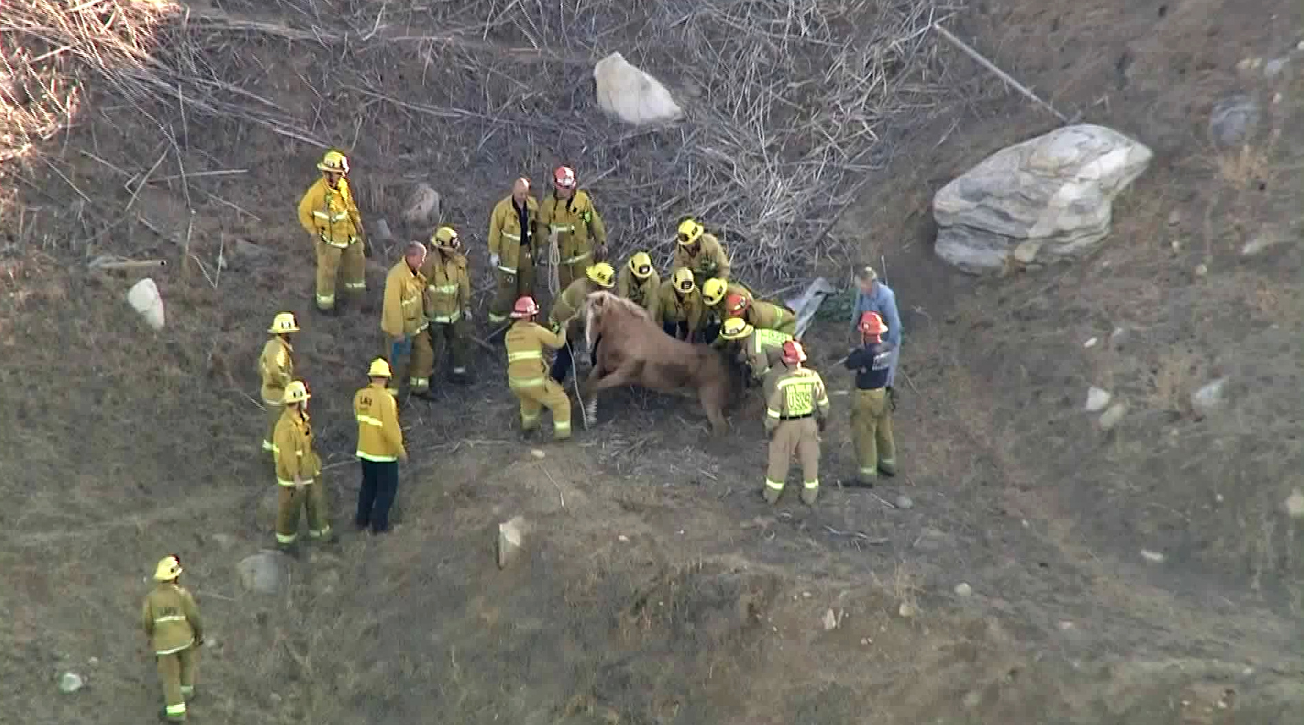 Firefighters work to rescue a horse trapped in a Sunland area hillside on Aug. 9, 2019. (Credit: KTLA)