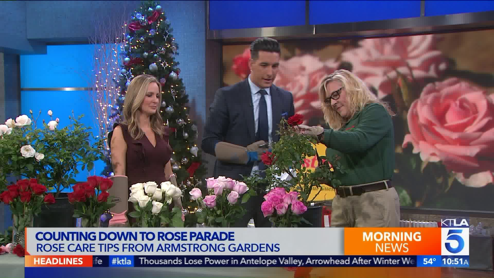 Rose Care Tips With California Certified Horticulturist Leslie
