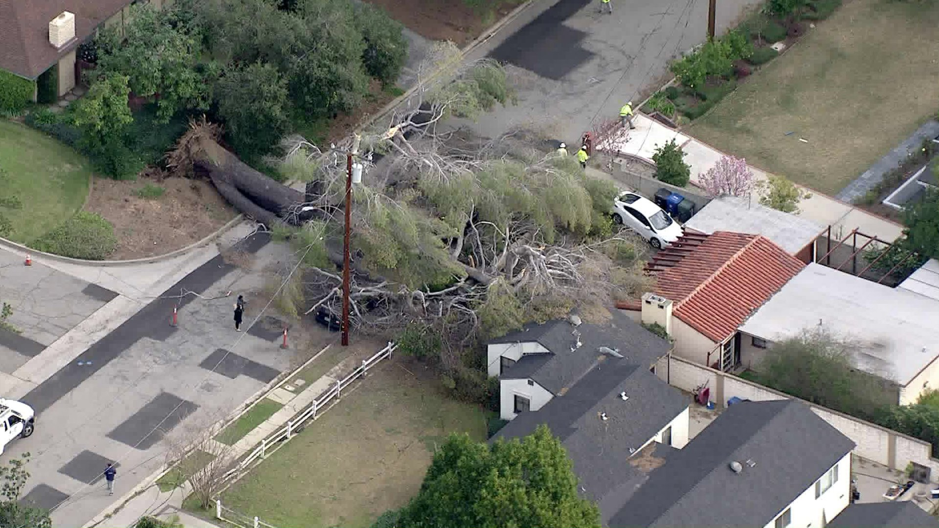 A massive tree was uprooted in the 700 block of Fairview Avenue in Sierra Madre as high winds battered Southern California on Feb. 3, 2020. (Credit: Sky5)