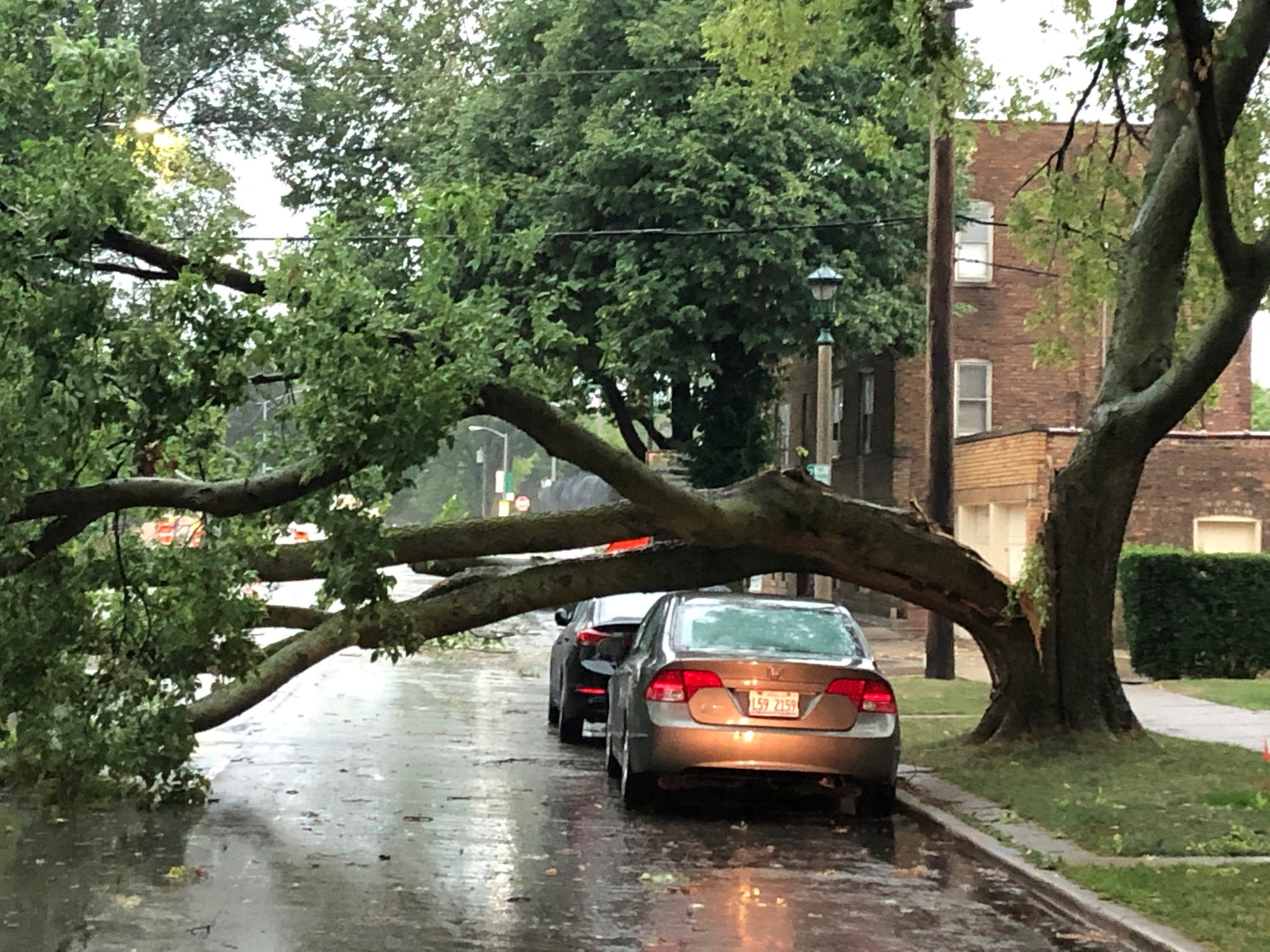 Part of a tree that had split at the trunk lies on a road in Oak Park, Ill., while also appearing not to have landed on a car parked on the road, after a severe storm moved through the Chicago area Monday, Aug. 10, 2020. (AP Photo/Dave Zelio)