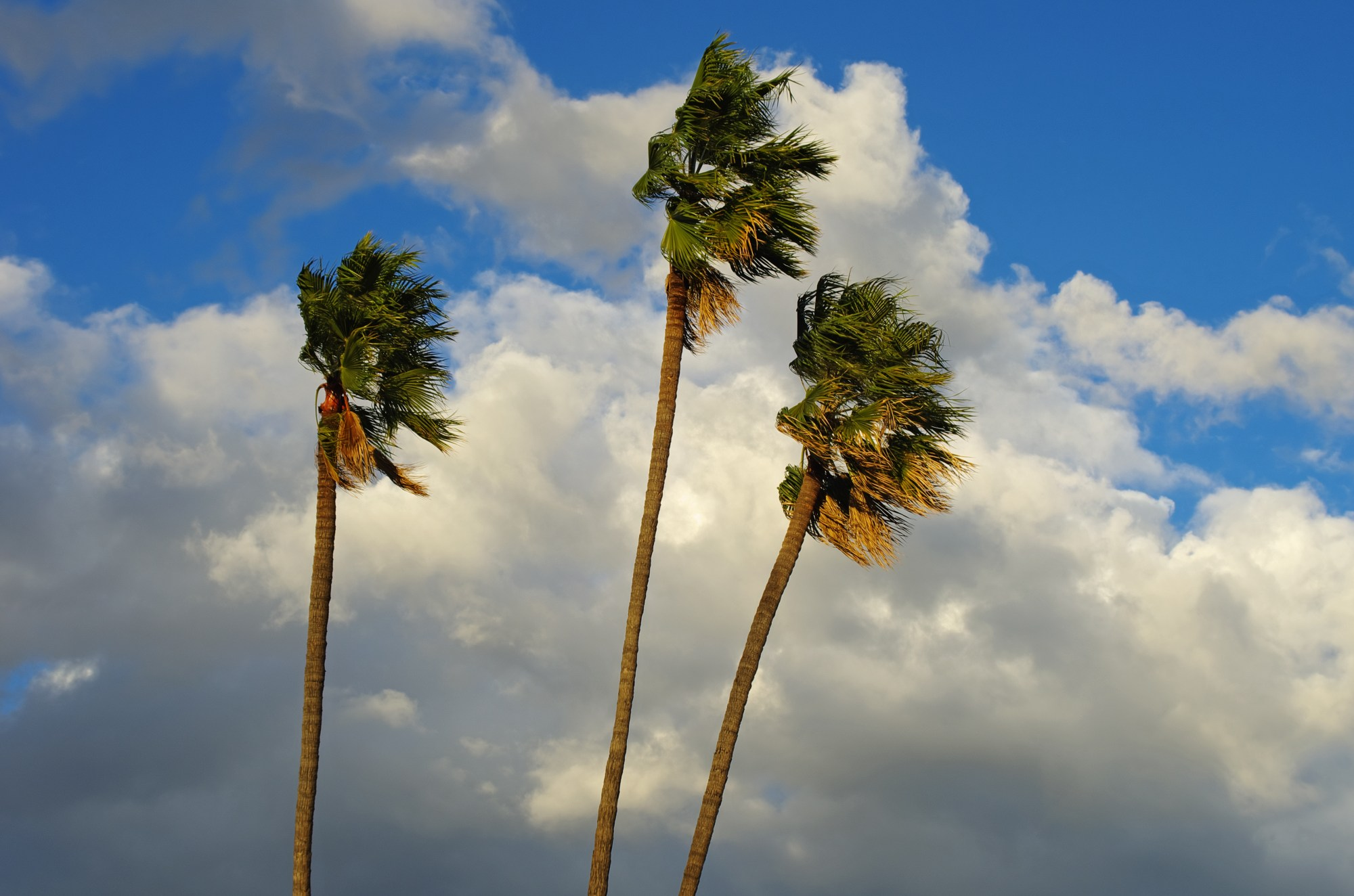 This file photo was taken on Dec. 18, 2012, in Pasadena during an afternoon of strong winds. (Getty Images)