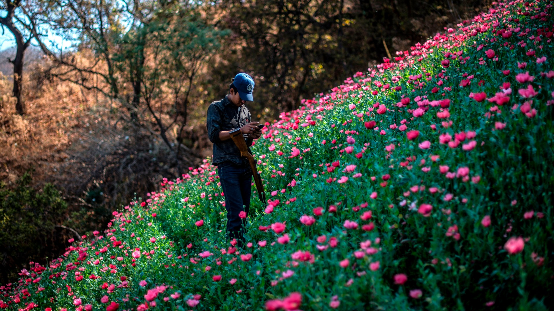 A Guerrero Community Police member looks at his mobile phone as he stands guard at an illegal poppy field, in Heliodoro Castillo, Guerrero state, Mexico, on March 25, 2018. (PEDRO PARDO/AFP via Getty Images)