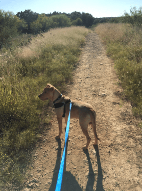 Do you hate running? Your dog won't. Take your dog, or a friend's, for a jog and they'll help keep you going. Photo by Janessa Rutiaga.