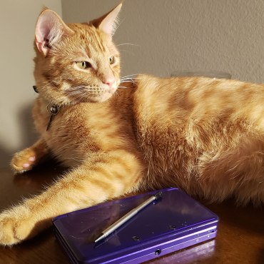 Orange cat posing next to a dark purple Nintendo 3DS