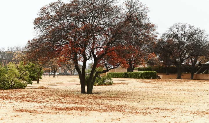Picture of autumn leaves on trees.