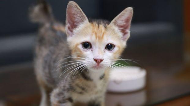 5 Obat Cacing untuk Kucing