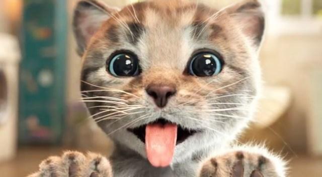 10 Foto Anak Kucing Lucu dan Imut-imut