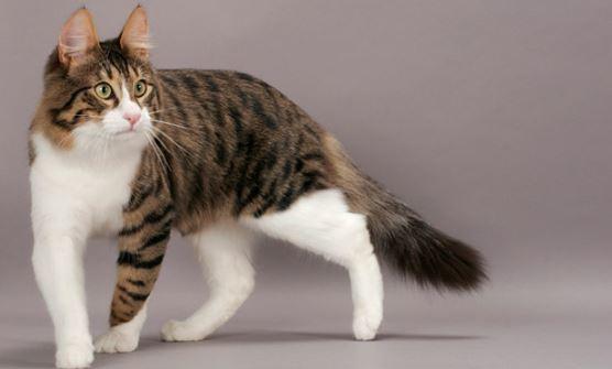 5 Tips Mencari Kucing Anggora Murah