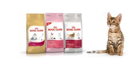 royal-canin-makanan-kucing 10 Makanan Kucing Yang Bagus Untuk Kesehatan