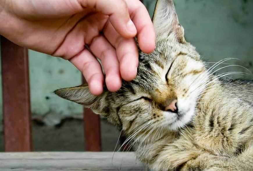 Kenapa Kucing Mengikuti Kita