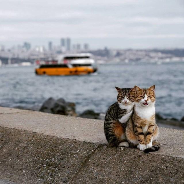 50 Gambar Kucing Lucu dan Imut Sedunia