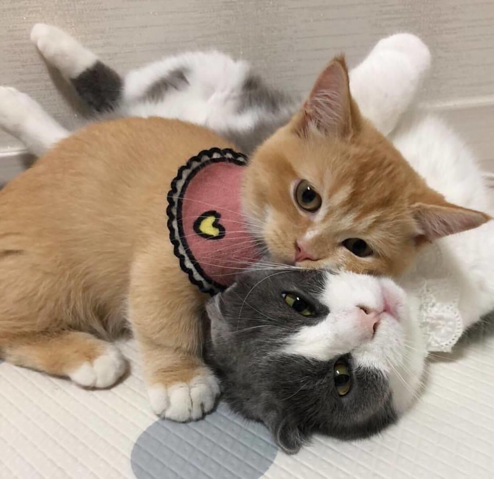 Unduh 94+  Gambar Kucing Anggora Imut Dan Lucu Paling Baru