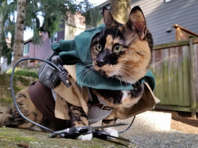 wpid kucinglucu ereneko 3.jpg - Ereneko, Kucing Lucu Tukang Cosplay