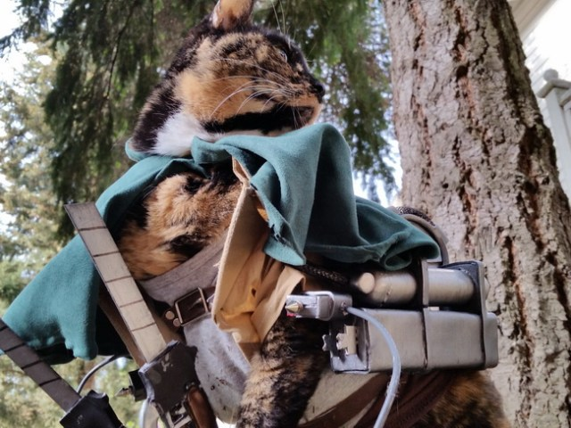 wpid kucinglucu ereneko4.jpg - Ereneko, Kucing Lucu Tukang Cosplay