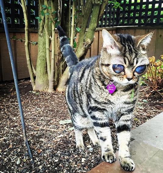 "wpid kucinglucu matilda - Kucing Lucu ini Dijuluki ""kucing Alien"""