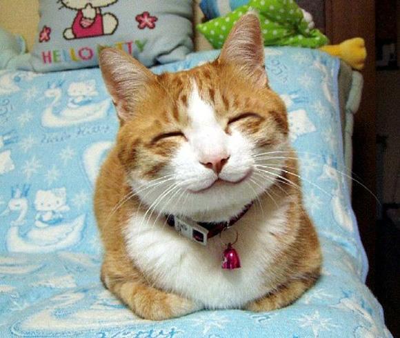 Foto Kucing Lucu Tersenyum