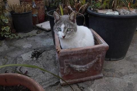 Kucing Buang Air di Pot Bunga