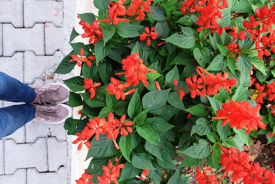 karadenizereğli-ereğli-karadeniz-çiçek-flower-gezi-kucukmartha