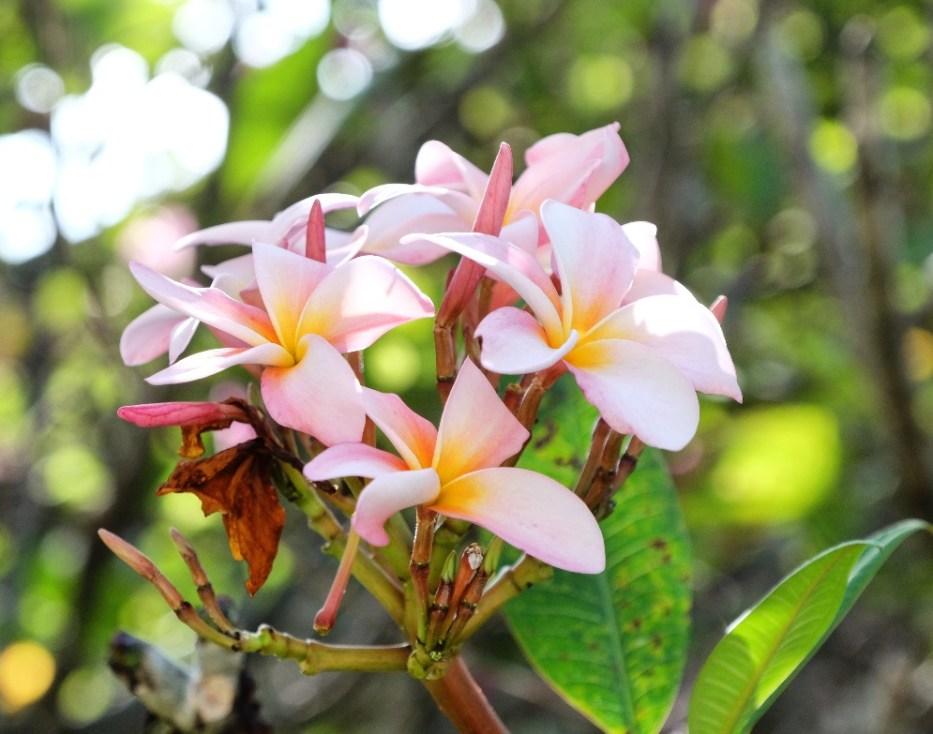 kucuk-martha-maldives-maldivler-kurumba-maldives-18