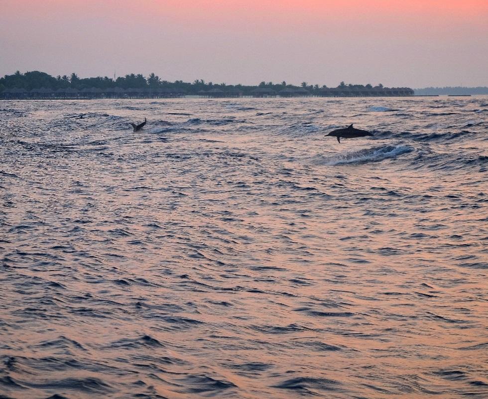 kucuk-martha-maldives-maldivler-kurumba-maldives-27
