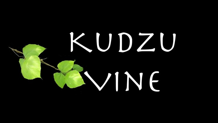 Kudzu Vine (Lyric Video)
