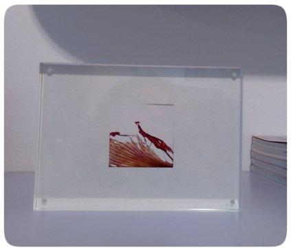 plexiglas amaryllis2