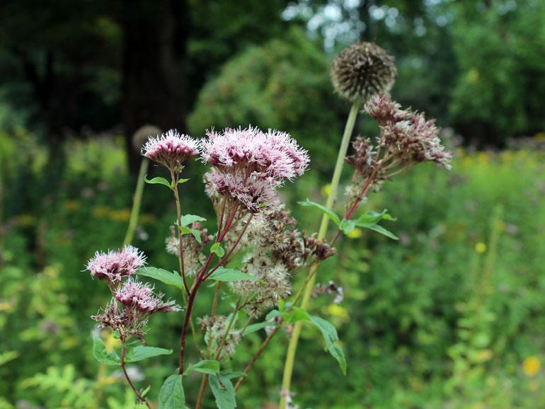 Trappenkamp Blumen Schmetterlingsgarten