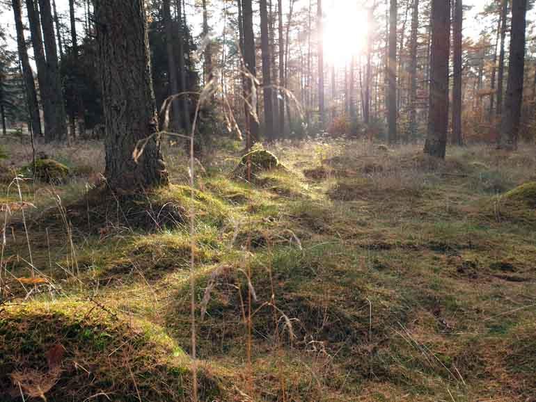 Segeberger Forst9
