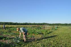 Cooper Nickel (left) works on his plot during a summer work night.