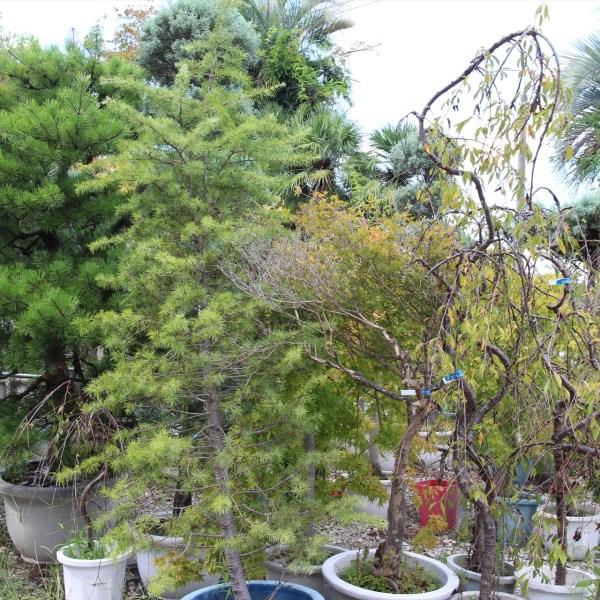 観葉植物(79)
