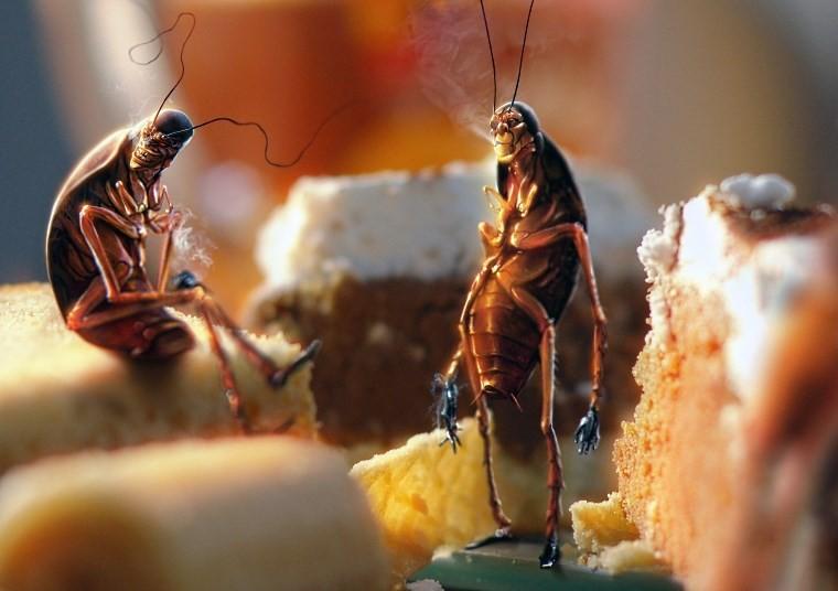 Все о тараканах домашних
