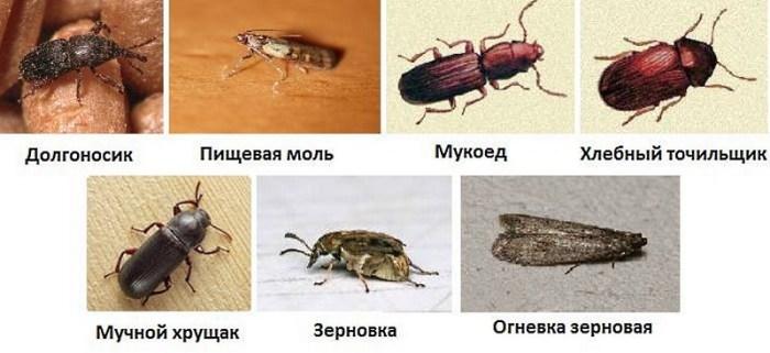 виды жучков