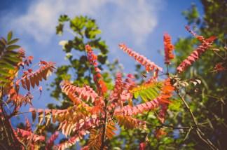 Tag 029 | 14.10.2014 Auch Heute hab ich gegen ein Prinzip verstoßen weil ich rote Herbstblätter (eigentlich) langweilig und ausgelutscht finde...