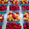 Kuhn-Orchards-Produce0830_085917