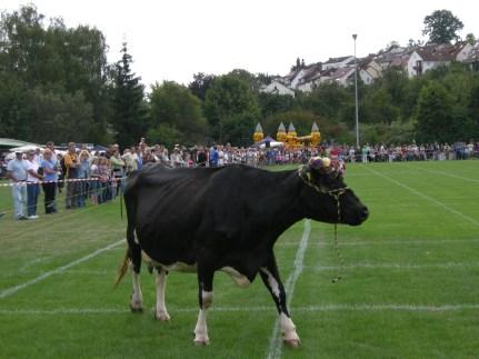 2009-kuhroulette (9)