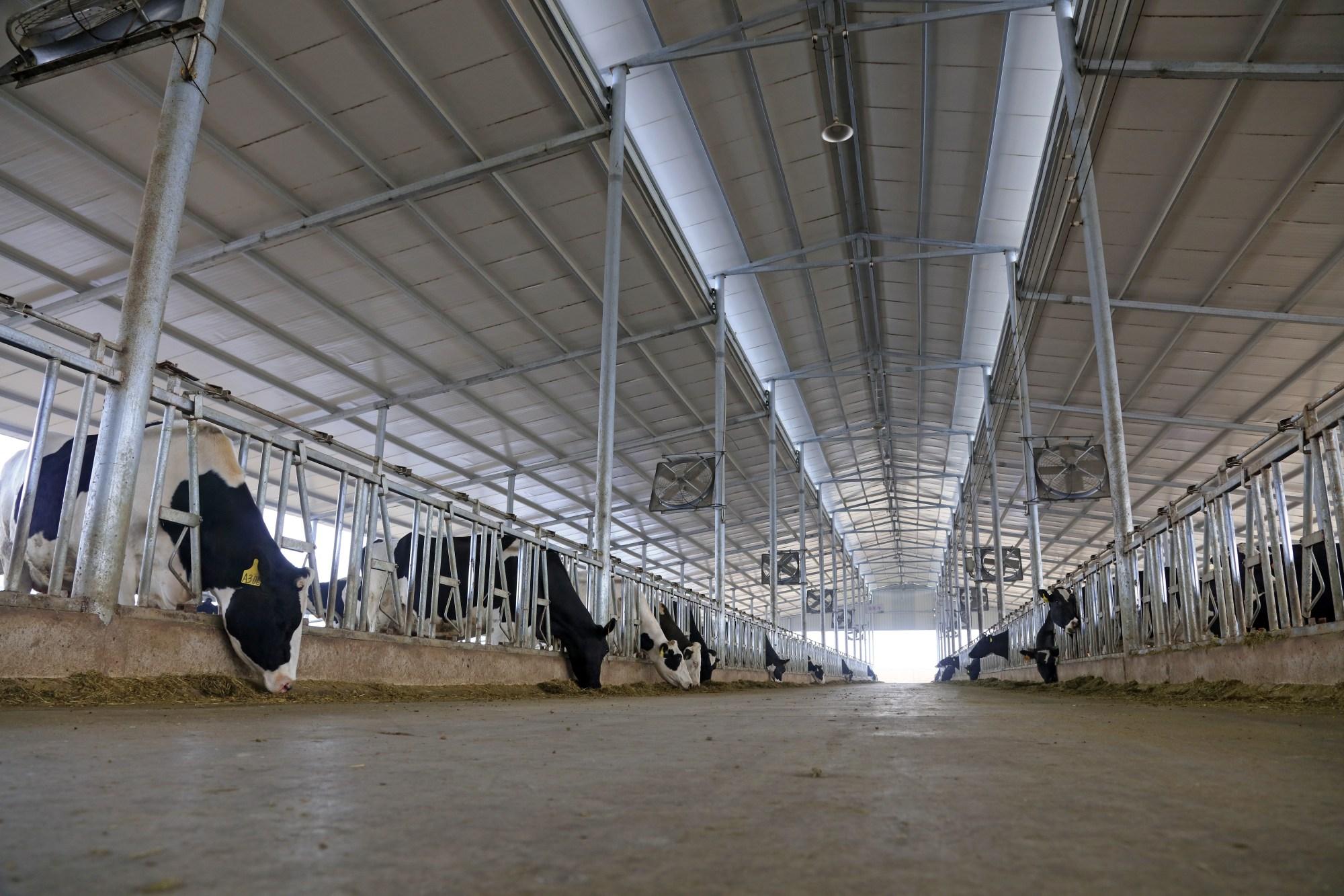 Kuhstall in offener Bauweise mit Ventilatoren